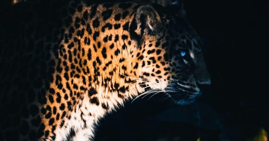 Yggdrasil Partners ReelPlay lansează Jaguar SuperWays de la Bad Dingo